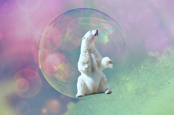 白クマの加工